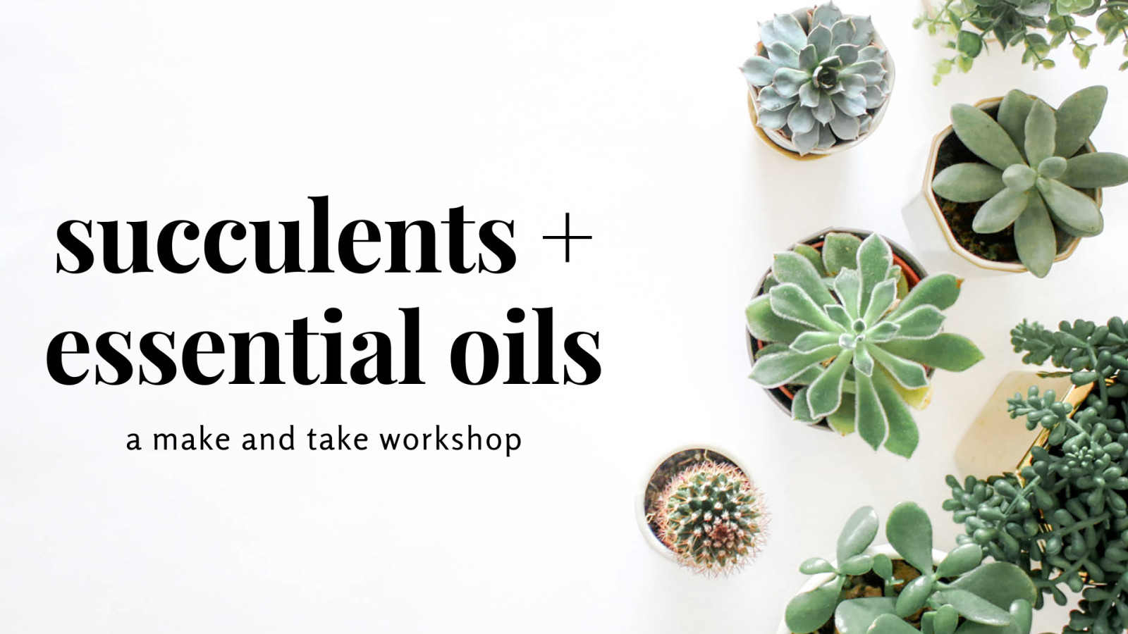 succulents + oils